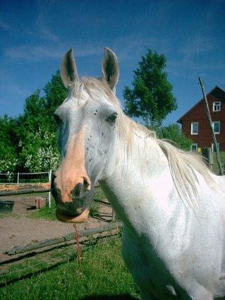 beine abzeichen pferd