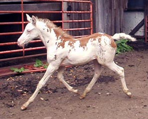 home pferdefarben genetik impressum